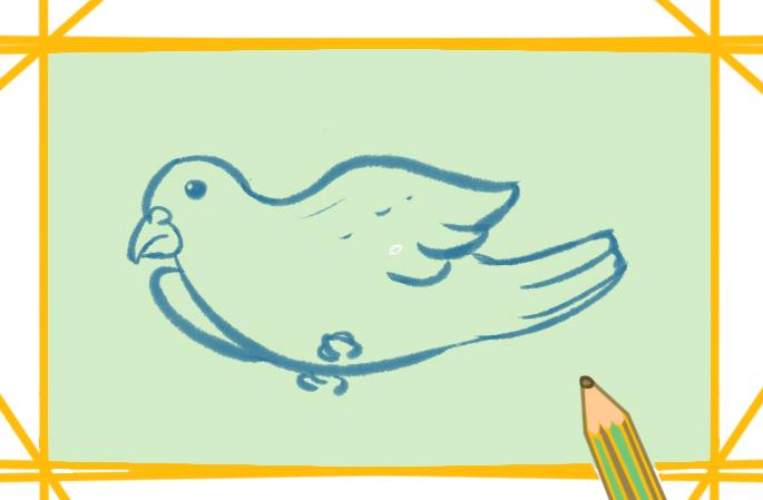 白鴿上色簡筆畫圖片教程